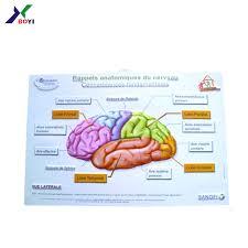 Brain Chart Plastic Pvc Human Brain 3d Anatomical Chart Medical Educational Poster Chart Buy 3d Anatomical Chart Medical Educational Pvc Human Brain Product On