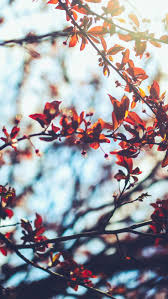 iphone 7 wallpaper tumblr. Contemporary Iphone 8 Free Autumn Inspired IPhone 7 Plus Wallpapers To Iphone Wallpaper Tumblr