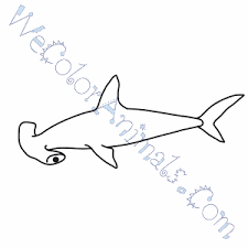 Small Picture Hammerhead Shark Coloring Pages