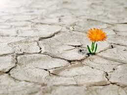 Resultado de imagen para floreciendo en el desierto