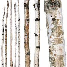 5 Birch Poles 6-8'