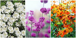 20 beautiful fall flowers and plants for your garden