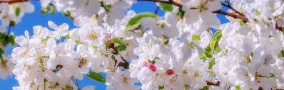 Jak voní jaro | Liftea