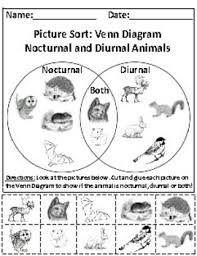 Animal Activity Chart Nocturnal And Diurnal Animals Picture Sort Graph Activity Chart Activity