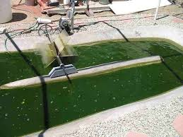 Is The Future Of Clean Energy A Pond Of Algae In Every Backyard Backyard Biodiesel