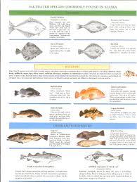 Alaska Fish Types Salmon Busters Fishingsalmon Busters Fishing