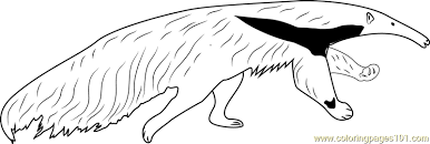 Small Picture Giant Anteater Running Coloring Page Free Anteater Coloring