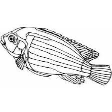 Small Picture Cichlid Coloring Sheet