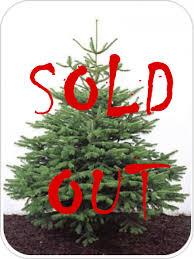 NORDMANN FIR 5-6FT CHRISTMAS TREE