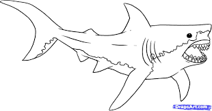 Small Picture Shark Drawing Coloring Page Within Megalodon Pages itgodme
