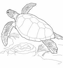 Get free high quality hd wallpapers coloring pages sea turtle printables