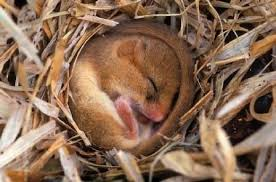 Image result for hibernation
