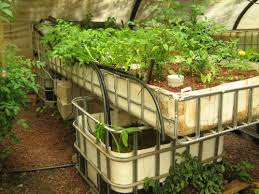 Can You Feed Your Family With Aquaponics  Peak ProsperityBackyard Aquaponics Forum