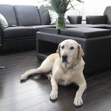 what is the best wood floor for kids and pets