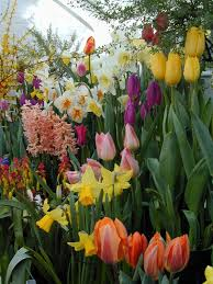 garden bulbs. BULB GARDEN | Botanic Garden At Smith College, Mum And Bulb Shows In Physiology . Bulbs D