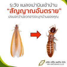 แมลงเม่า บินเข้าบ้าน ทำยังไงดี - VGS very good services