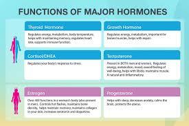 Hormones And Their Functions Chart Hormone Optimization At Meliora Integrative Medicine