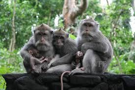Hasil gambar untuk monkey forest ubud