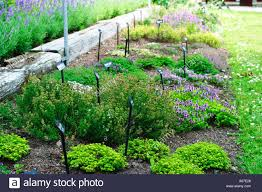 herb garden with various kinds of thyme and small signs