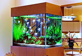 image of fish tank decoration pictures