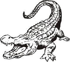 Small Picture adult alligator pictures to print cartoon alligator pictures to