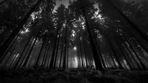 dark forest wallpaper 1920x1080. Modren 1920x1080 Dark Forest Moon High Definition Wallpaper  HD Wallpapers For 1920x1080 1