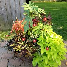 Six Container Gardening Ideas You Need To KnowContainer Garden Ideas Full Sun