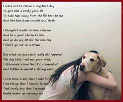 Rescue Dog Quotes Interesting Pin By Kathy On Schnauzer Other Dog Stuff ™� Pinterest Dog