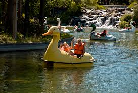 duck and swan paddle boats