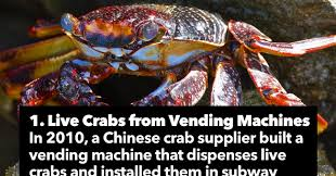 Crab Vending Machine Extraordinary 48 Crazy Things You Can Buy In China The Most Interesting Things