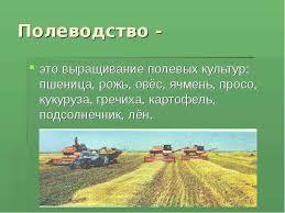 Курсовая работа по растениеводству подсолнечник ru Урок по теме Растениеводство в нашем крае Цели сформировать представления о растениеводстве в нашем крае ознакомить