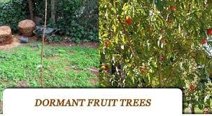 Ask Ruth Organic Horticultural Oil For Fruit Trees  Organic Dormant Fruit Trees