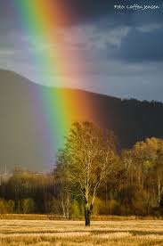 Root Of The Rainbow Todays Image Earthsky