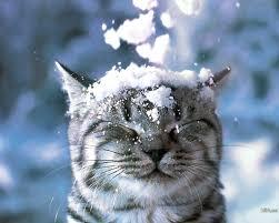 48+] Free Animal Winter Desktop Wallpaper on WallpaperSafari