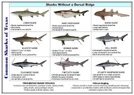 Types Of Sharks Chart Tackle Box Id Texas Saltwater Fish Identification Card Jumbo Edition 60 Common Fish New Sept 2019 Tpwd Rules