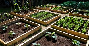 Small Picture Vegetable Gardens Designs Markcastroco