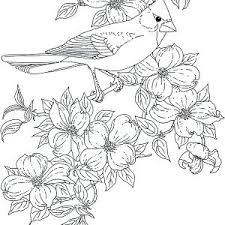 Cardinals Coloring Pages Cardinal Coloring Page With Cardinal