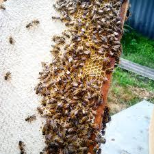 пчелиныесоты Instagram Posts Gramhanet