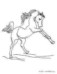 Lovely Wild Horse Coloring Pages And 19 Wild Horse Coloring Pages To