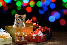 Christmas Gifts For Dogs And Cats Pamper Your Pet With These PresentsChristmas Gifts Cats