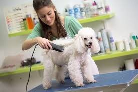 the best dog grooming clippers