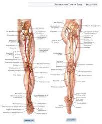 Upper Leg Muscle Chart 24 Best Leg Muscles Images In 2019 Bodybuilding