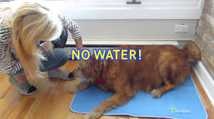 no water dog cooling bed