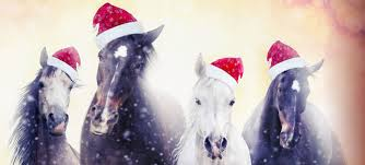 we have hundreds of fantastic gift ideas for both horse and rider