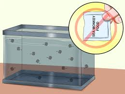 Sea Monkey Light How To Raise Sea Monkeys 13 Steps With Pictures Wikihow