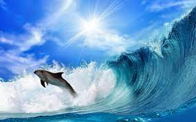 Dolphin Wallpapers HD - Wallpaper Cave