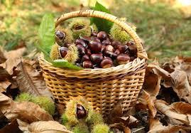 Resultado de imagem para castanheiro no outono