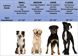 Saint Bernard Height Chart St Bernard Dog Size Comparison