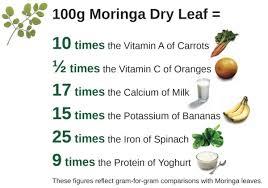 Moringa Comparison Chart Moringa Tree The Miracle Tree Superfood Smart Food