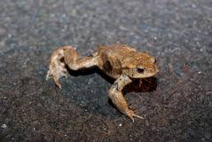 Image result for free pic of toads crossing road